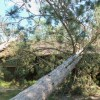 Photos of storm damage to St. Croix State Park