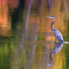 Winners of St. Croix River photo contest announced
