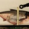Invasive Carp Found Near St. Croix River