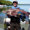 Invasive bighead carp in St. Croix River
