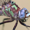 Dive Into Dragonflies At Educational Event