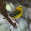 Park Service Scientists Survey St. Croix Birds