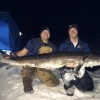Huge St. Croix River sturgeon.